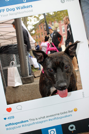 Bark In The Park, Hoboken