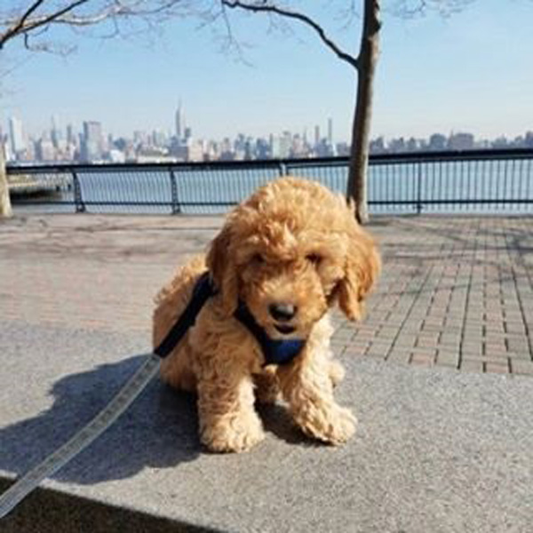 Hudson Puppy On The Hudson River