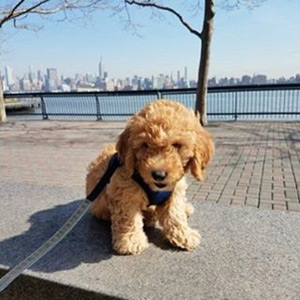 Puppy NYC Skyline