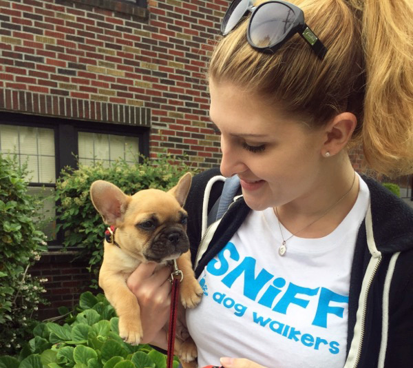 Dog Walk In Hoboken With Captain, Frenchie Puppy