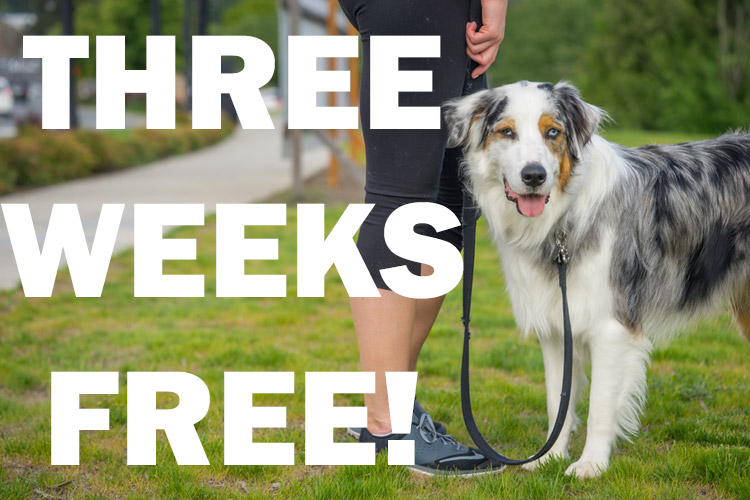 Three Weeks Free! Exclusive Offer from SNIFF