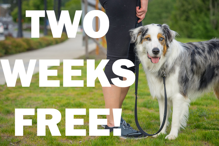 two weeks free from sniff dog walkers