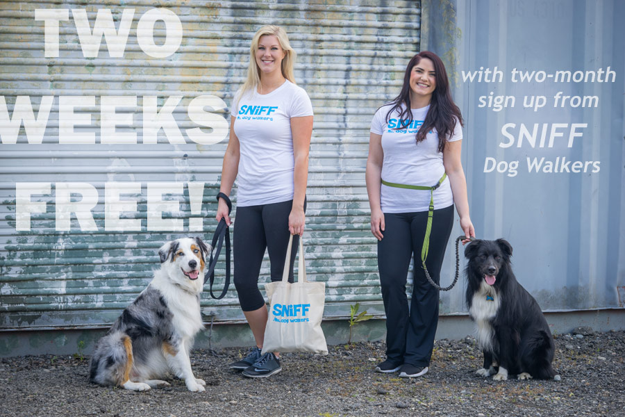 Special Offer Two Weeks Free From SNIFF Dog Walkers